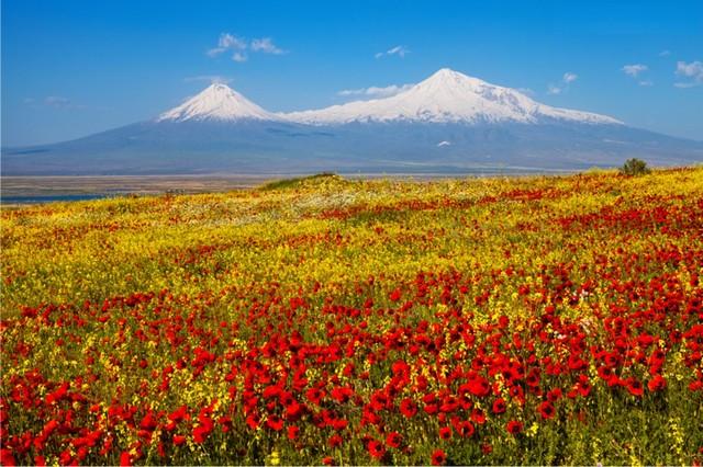 Картинки по запросу цахкадзор поле цветов